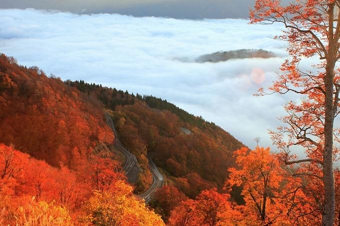 Hakusan Shirakawa-go White Road là cung đường ngắm cảnh dài 33km nối từ thành phố Hakusan, tỉnh Ishikawa đến làng Shirakawa, tỉnh Gifu. Cứ đến mùa thu người dân và du khách có thể lái xe và tận hưởng tiết trời mát mẻ cùng khung cảnh lá đỏ, vàng rực rỡ hoặc tìm đường đi bộ tới các thác nước trong vườn quốc gia Hakusan. Ảnh: Japan Travel by NAVITIME.