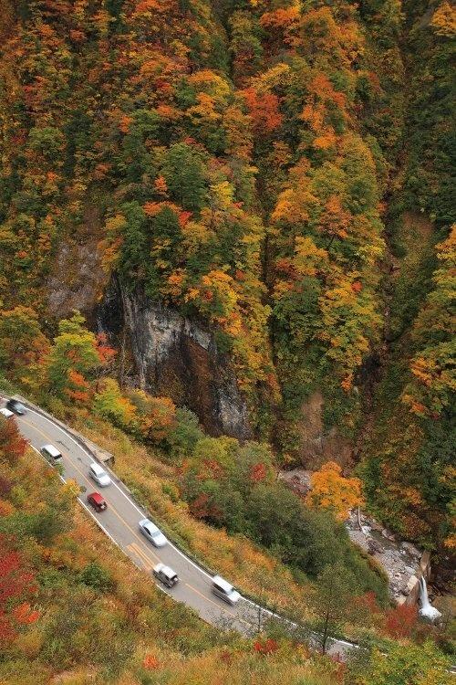 Đường chạy qua một vùng núi non trùng điệp có độ cao 600 - 1.450 m so với mực nước biển. Hakusan Shirakawa-go nổi tiếng nhất vào mùa thu khi du khách khắp nơi đổ về ngắm những cánh rừng chuyển màu lá, trải thảm lá đỏ vàng từ trên đỉnh núi xuống các thung lũng. Ảnh: Shoryudo.