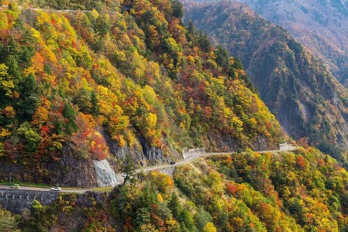 Nhờ địa hình phân tầng mà vào mùa thu các cánh rừng cũng đổi màu lá rất đa dạng và thay đổi theo thời gian. Thời điểm đẹp nhất để ngắm mùa lá đỏ, vàng là từ đầu tháng 10 đến giữa tháng 11, khi cung đường đóng cửa. Ảnh: zekkeijapan.