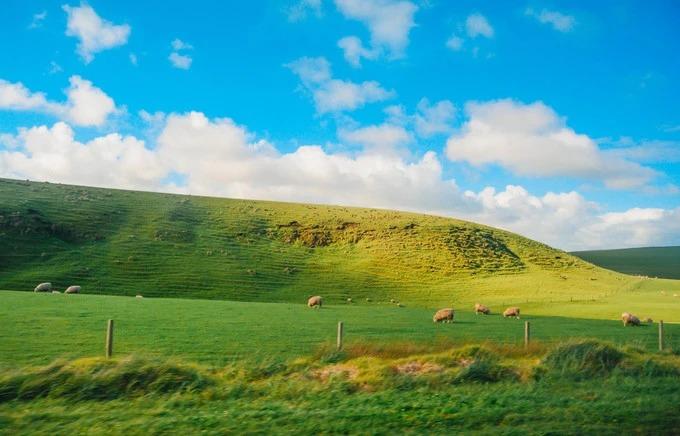 Bạn có thể bắt gặp những đồng cỏ dài bất tận, những chú cừu, ngựa nhẩn nha ăn cỏ dưới nền trời xanh, mây trắng, đẹp tựa như màn hình Windows kinh điển.