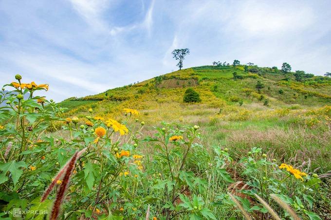 """Tên ngọn núi lửa đã ngừng hoạt động hàng triệu năm theo tiếng địa phương nghĩa là """"củ gừng dại"""", thuộc làng Ia Gri, xã Chư Đăng Ya, huyện Chư Păh và cách TP Pleiku khoảng 30 km về phía bắc. Điểm đến này đang bước vào mùa đẹp nhất trong năm khi những khóm hoa dã quỳ bung nở trên các triền đồi, núi và lối đi xung quanh."""
