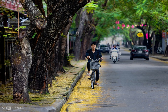 Lá vàng rơi phủ kín vỉa hè đường Phan Bội Châu, cạnh bên Trường Quốc học Huế.