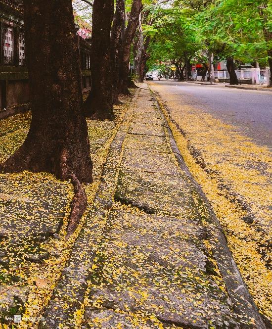 Một số con đường ở Huế còn được người dân quen gọi là đường phượng bay khi xuất hiện trong các bài thơ, ca.