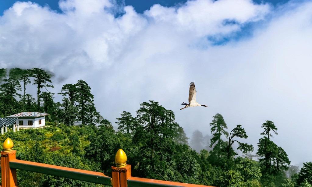 Tiger's Nest cũng được xem là một trong những nơi lạnh nhất ở Bhutan. Tu viện ẩn hiện sau những hàng cây và vách đá cheo leo đầy kỳ diệu, xen lẫn là những lớp sương mù và mây trắng bồng bềnh. Tại đây, bạn có thể nhìn toàn cảnh thung lũng Paro bên những góc ban công xinh xắn của mỗi ngôi điện. Ảnh: 52perfectdays.