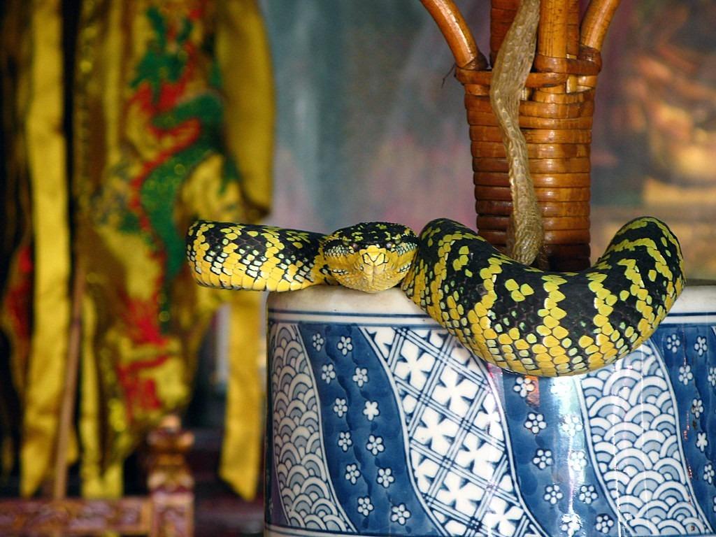 Truyền thuyết kể rằng nhà sư đã che chở và cứu sống những con rắn. Sau khi nhà sư chết, việc xây dựng ngôi đền được hoàn thành, chúng đã di chuyển đến đây. Những con rắn được các học trò của nhà sư cho phép ở lại. Từ đó, đền trở thành ngôi nhà của một số loài rắn độc như rắn chuông, rắn lục... Ngôi đền được xây dựng vào năm 1850 bởi David Brown, người Scotland. Ảnh: Flickr.