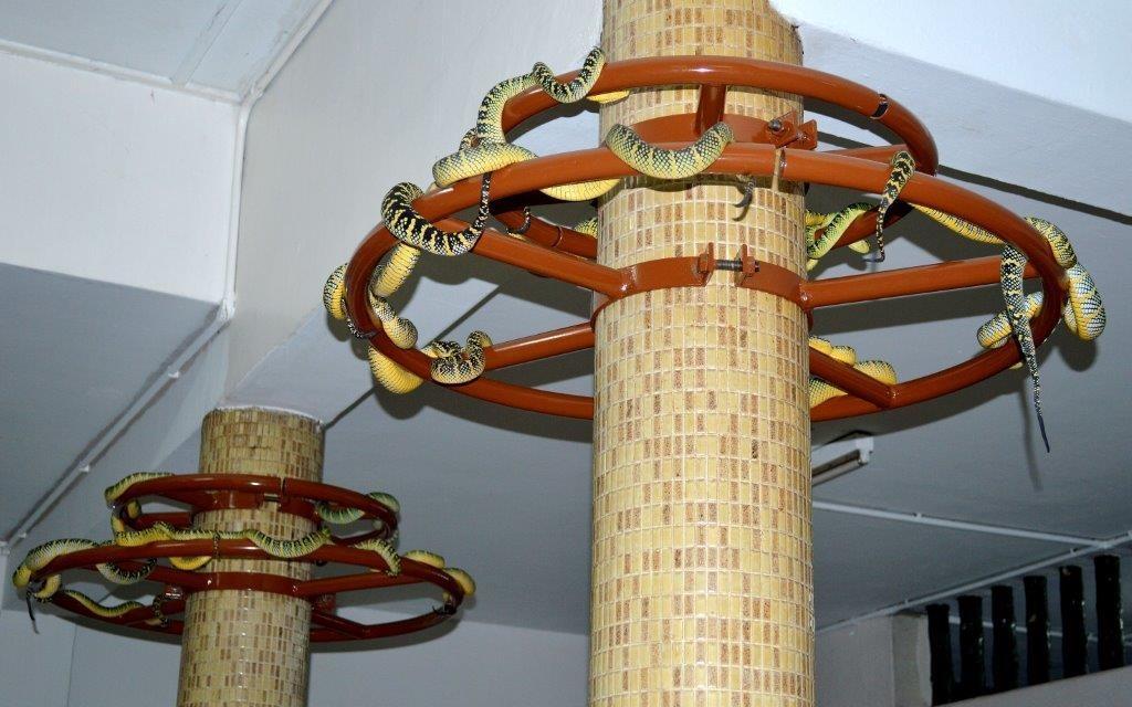 Ngày nay, số lượng rắn được cho là đang suy giảm do môi trường sống tự nhiên của chúng bị xáo trộn. Tuy nhiên, trong các lễ hội, bạn vẫn sẽ thấy nhiều con rắn ngang nhiên di chuyển trong đền. Chúng thường cuộn tròn trên bàn thờ, quấn quanh xà, các bức tranh, khung ảnh treo tường. Ảnh: PenangTapestry.