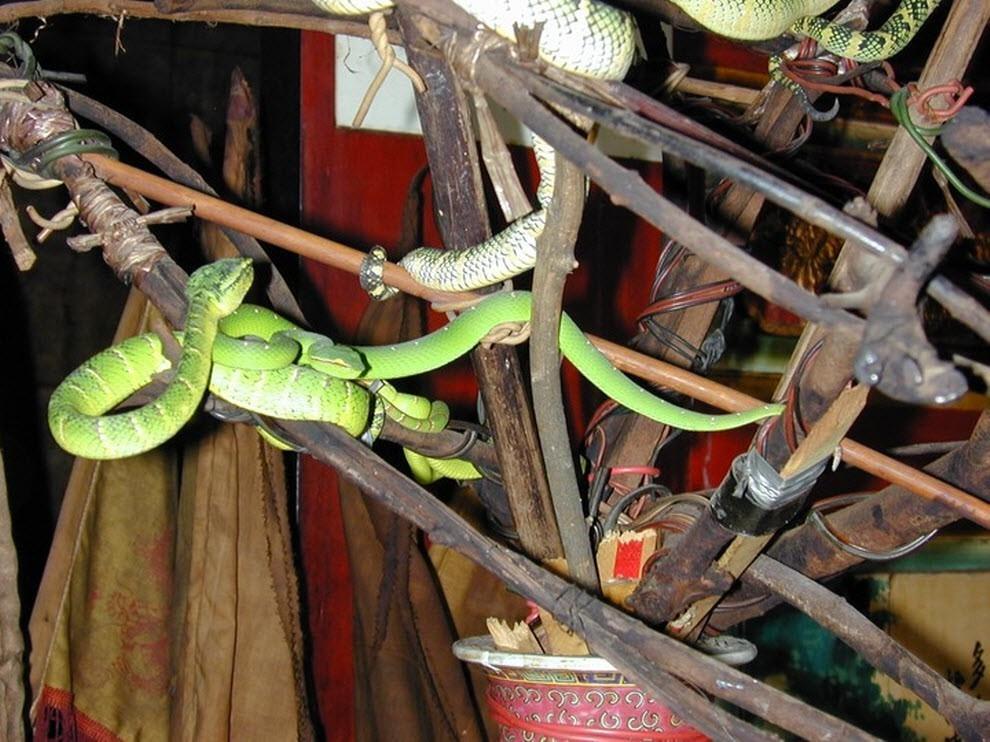 Dù có mặt khắp nơi, những con rắn chưa từng được báo cáo về hành vi cắn người. Nhiều tấm biển được dựng lên trong đền nhằm cảnh báo du khách không được chạm vào rắn. Tới đây, bạn cũng có thể chiêm ngưỡng triển lãm nhỏ cạnh ngôi đền và tham gia chụp ảnh cùng trăn và rắn hổ mang đã khử nọc độc nhưng vẫn còn nguyên răng nanh. Ảnh: TURAKO.