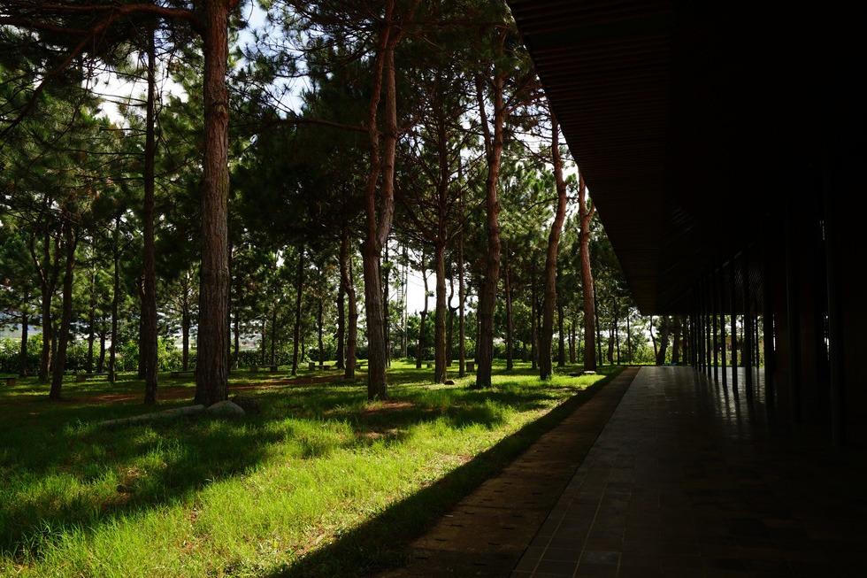 Bao quanh nhà thờ là một rừng thông, không có tường vây, để bất cứ ai cũng có thể ghé lại và viếng thăm
