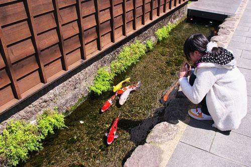 Ngoài Shimabara, các thị trấn như Hida Furukawa, Gujo Hachiman và Tsuwano cũng xuất hiện hình ảnh như thế này. Ảnh: Mahlervv/Odditycentral.
