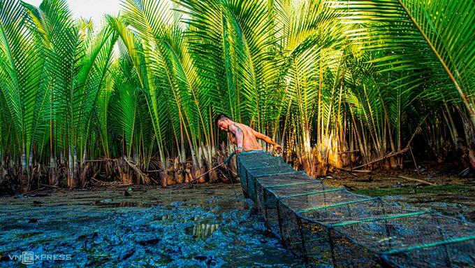 Một người dân địa phương dùng chiếc dớn để bắt cá. Phía trên rừng là nơi trú ngụ của các loài chim, cò, còn dưới mặt nước là nơi sinh sống của các loài nước lợ như cá đối, cua, ốc mang đến nguồn lợi thủy sản cho ngư dân.