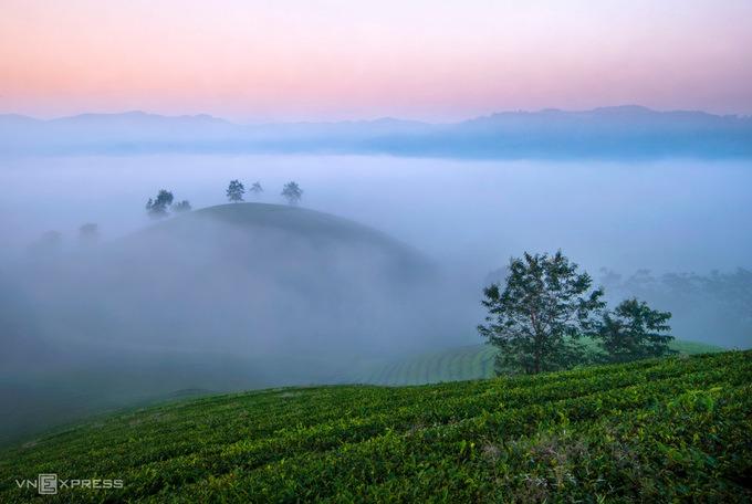 Cây chè tại đây đã gắn bó với cuộc sống người dân tại Long Cốc từ bao đời nay, được xác định là cây trồng chủ lực đem lại hiệu quả kinh tế cao.
