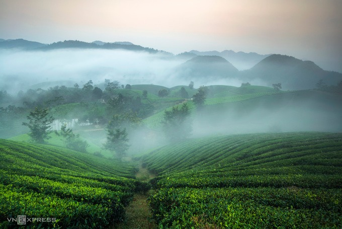 Thương hiệu chè Long Cốc được sản xuất theo tiêu chuẩn VietGAP, với các loại sản phẩm chè an toàn từ truyền thống đến giống mới chất lượng cao, như chè Đinh Bát Tiên hay chè Shan Bát Tiên.