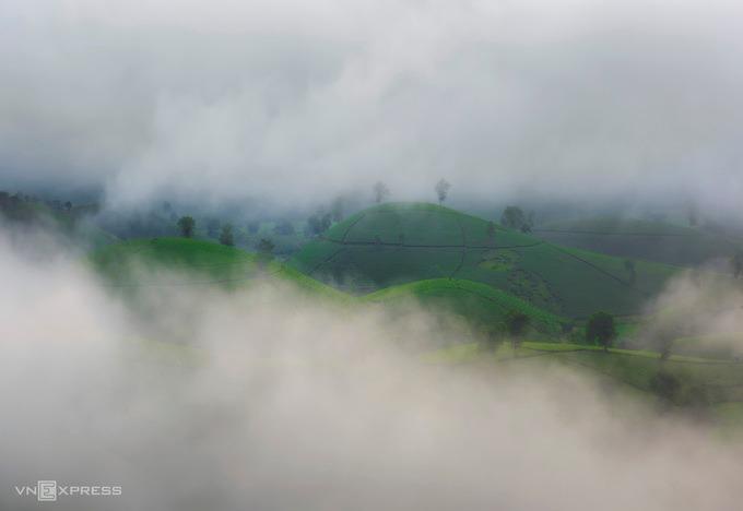 Khi tiết trời chuyển từ thu sang đông, sương bao phủ dày đặc những đồi chè Long Cốc.
