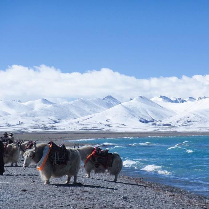 """Trong tiếng Tây Tạng, Namtso có nghĩa là """"hồ thiên đường"""", được các phật tử Tây Tạng coi là hồ thánh. Từ cuối tháng 5 đến giữa tháng 9, du khách có thể bắt gặp người Tây Tạng du mục chăn bò yak và cừu ven hồ. Vào năm con cừu theo lịch Tây Tạng, các tín đồ sẽ thực hiện một cuộc hành hương tới đây. Ảnh: Deskgram."""
