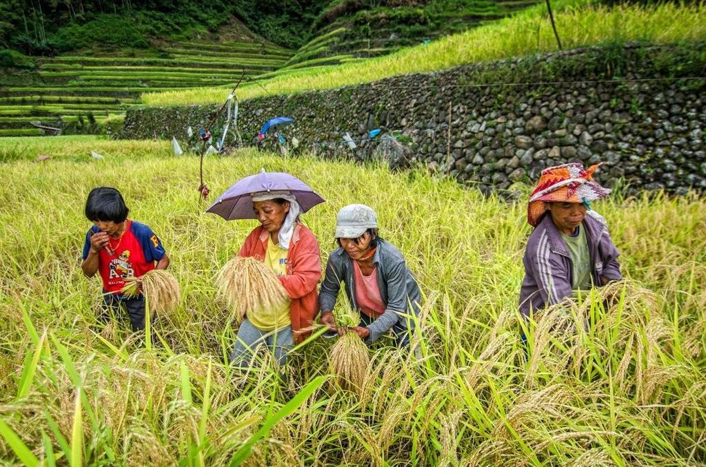 trekking-san-may-va-4-trai-nghiem-hap-dan-chi-co-o-philippines-ivivu-13