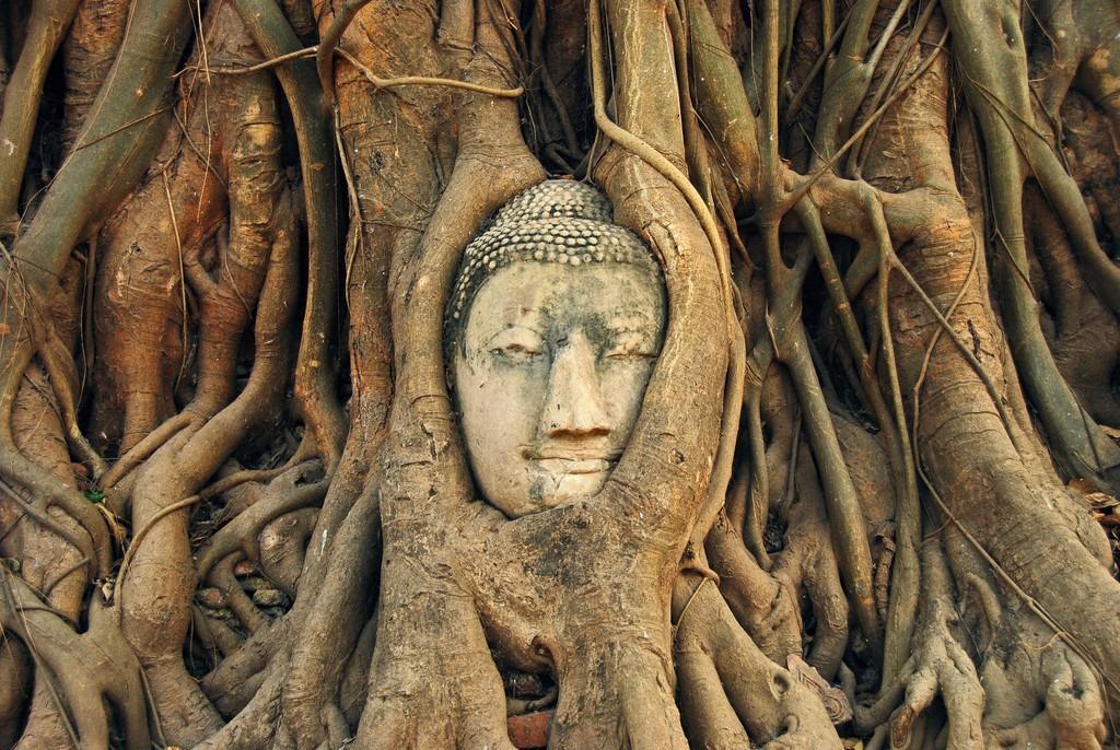 Khuôn mặt Phật 700 năm tuổi được bảo vệ toàn vẹn bất chấp rễ cây bao quanh. Gương mặt được nhận xét mang vẻ đẹp thánh thiện và siêu thoát, đem lại cảm giác bình an cho du khách ghé thăm. Đối với người mộ đạo, giữa phế tích đổ nát với nhiều bức tượng mất đầu, sự hiện diện của đầu tượng Phật trong thân cây toát lên ý nghĩa đặc biệt linh thiêng. Ảnh: Pinterest, Thousand Wonders.