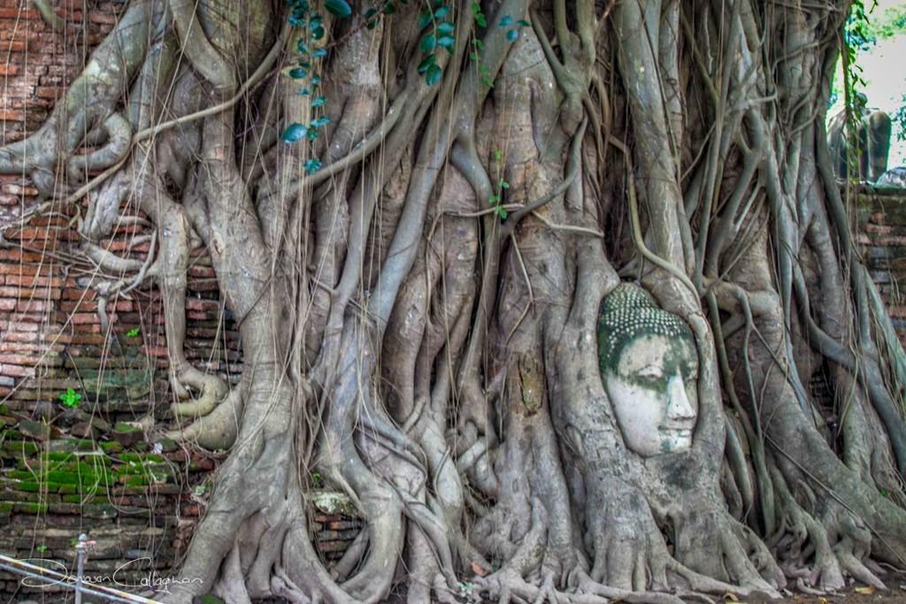 Người Thái tin rằng một binh lính đã đặt đầu của pho tượng vào gốc cây giữa lúc cố đô bị phá hoại. Trải qua nhiều năm tháng, những chùm rễ vươn ra ôm trọn lấy khuôn mặt đức Phật, tạo nên kiệt tác độc nhất vô nhị, sống động đến kỳ lạ. Bức tượng phủ rêu nhanh chóng trở thành điểm đến tâm linh thu hút du khách khắp thế giới. Ảnh: Locationscout, Thaizer.