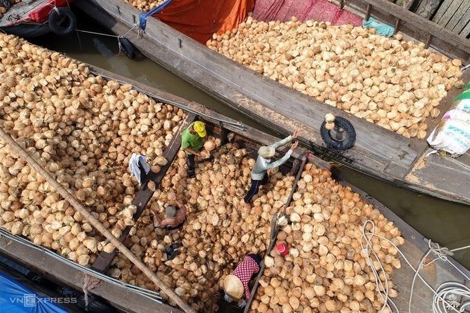 """Tác phẩm """"Tập kết dừa trên bến sông Thơm"""" của tác giả Nguyễn Minh Tân (TP HCM), giải khuyến khích. Bến Tre hiện có 72.000 ha dừa, 200.000 hộ trồng, là nơi chế biến xuất khẩu dừa lớn nhất cả nước."""