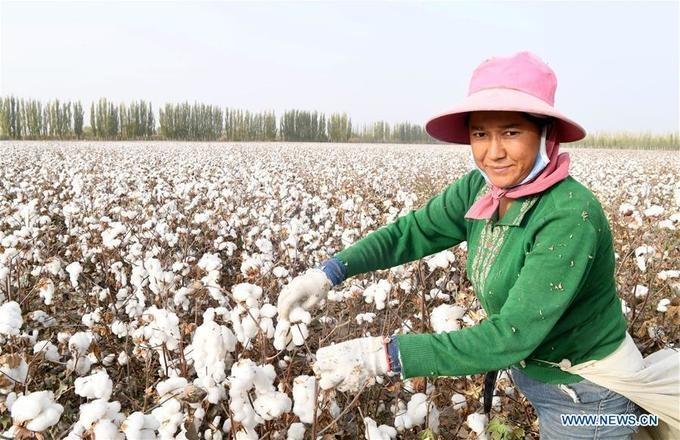 Hàng chục nghìn cư dân từ các huyện nghèo nhất trong khu tự trị đổ về đây để làm việc thời vụ trên những cánh đồng bông rộng lớn. Công việc của họ là thu hoạch bông và tập kết ở nhà máy hoặc cơ sở sản xuất trong vùng.