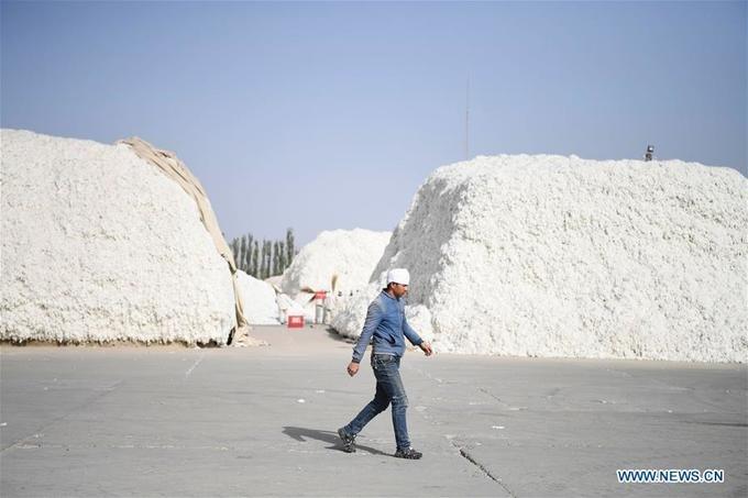 Mỗi tháng, người lao động có thể kiếm được khoảng 6.000 tệ (tương đượng 20 triệu đồng). Trung bình mỗi ngày, một nhân công thu hoạch được 80 kg bông.