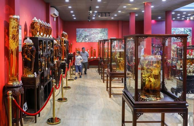 Ngày 1/12, Bảo tàng sâm Ngọc Linh (quận Tân Phú, TP HCM) hoạt động sau hai tháng xây dựng. Tại đây trưng bày hơn 400 hiện vật về giống sâm quý của Việt Nam.