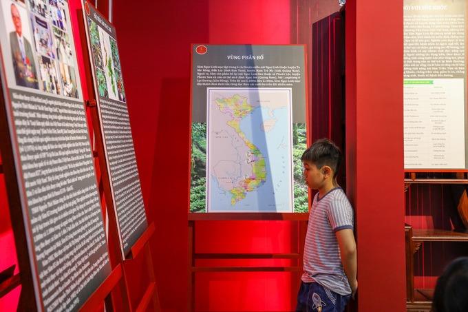 Bảo tàng rộng khoảng 250 m2, ngay lối vào là những bài viết, tranh ảnh, sơ đồ phân bố của sâm Ngọc Linh. Loài này chủ yếu ở vùng núi Ngọc Linh (thuộc Kon Tum và Quảng Nam), ở độ cao từ 1.200 đến 2.000 m.  Sâm Ngọc Linh là một loại sâm quý đặc hữu của Việt Nam, được dược sĩ Đào Kim Long phát hiện vào năm 1973 trên núi Ngọc Linh. Nó nằm trong bốn loài sâm quý thế giới (sâm Ngọc Linh, sâm Triều Tiên, sâm Mỹ, sâm Trung Quốc) bởi có trong nhóm cấu trúc saponin khung dammaran giá trị cao. Đặc biệt, số lượng saponin của sâm chiếm tỷ lệ cao, nổi trội với 52 hợp chất nằm ở phần thân dưới, rễ, củ (sâm Triều Tiên dưới 40 hợp chất).