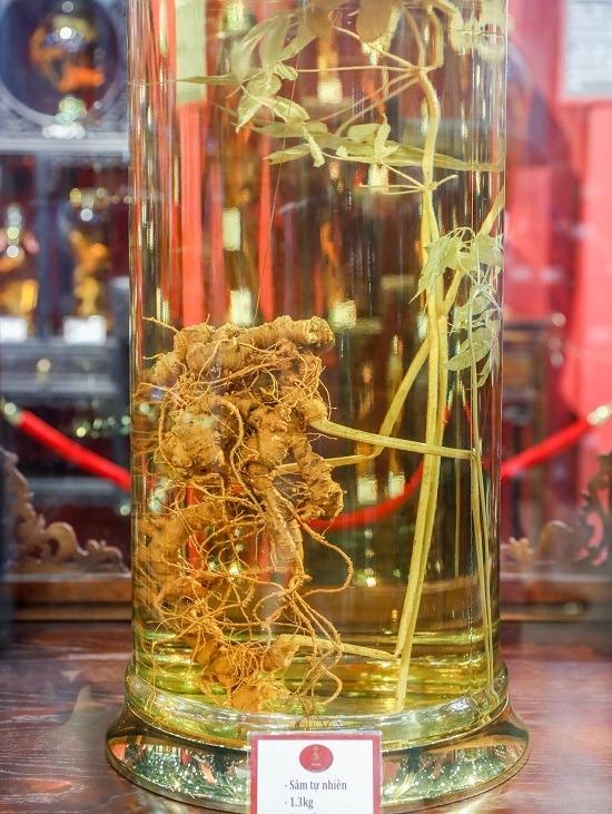 """Củ sâm Ngọc Linh to nhất trưng bày tại bảo tàng nặng 1,3 kg. """"Củ sâm này tôi sở hữu hơn 5 năm nay, có giá hàng tỷ đồng được nhiều người hỏi mua"""", ông Việt cho biết."""