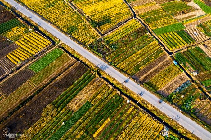 Những luống hoa nằm san sát là khung cảnh đặc trưng của đoạn đường qua thôn Nghĩa Trai, xã Tân Quang, huyện Văn Lâm, Hưng Yên, cách Hà Nội khoảng 30 km.