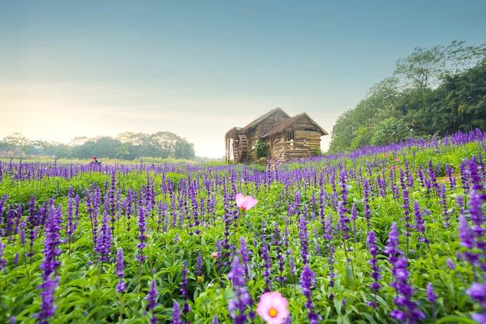 Cuối tuần, vườn hoa tập trung đông người. Do đó, bạn nên chọn tham quan vào ngày thường hoặc đi sớm dịp cuối tuần, để tránh đông đúc.