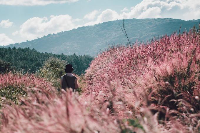 Khác với đồi cỏ hồng (hay còn gọi là cỏ tuyết), cỏ đuôi chồn thân cao hơn, có bụi quá đầu người. Cỏ có nhiều màu nhưng màu hồng là ấn tượng nhất. Tầm 9h hoặc 16h là lúc chụp ảnh lý tưởng, nhưng nếu đi vào buổi trưa, cỏ nhuộm hồng bởi ánh nắng, lên ảnh màu rực rỡ.