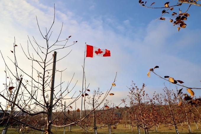 Táo được thu hoạch vào cuối thu để chuẩn bị cho dịp lễ hội lớn vào cuối năm, Thanksgiving (Lễ tạ ơn) và Noel. Vì thế, thời điểm này vườn cây trơ trụi.