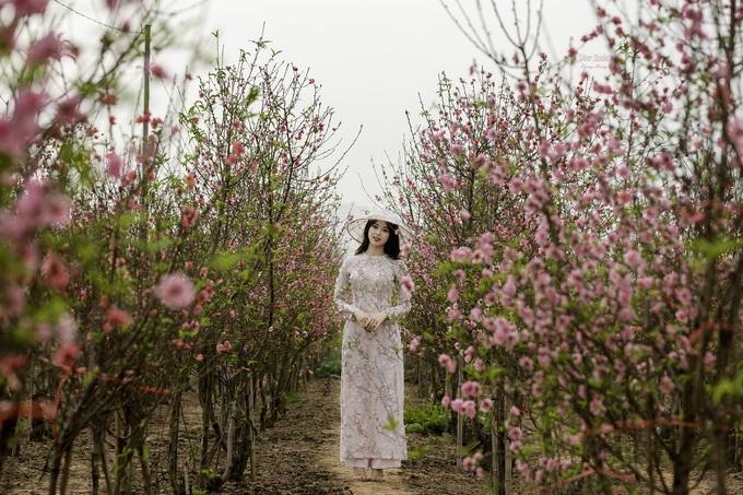 Vườn đào Nhật Tân  Nhật Tân là một trong những điểm trồng hoa đào lớn nhất tại Hà Nội. Cây được trồng thành từng hàng, giữa bãi sông Hồng, nên khi nở sẽ tạo thành những con đường đẹp.  Khoảng 2 tuần trước Tết, do tiết trời ấm áp, hoa đào đã bắt đầu nở, thu hút nhiều khách tham quan. Du khách vào vườn chụp ảnh miễn phí, tuy nhiên cần xin phép và không ngắt, làm gãy cành hoa. Ngoài tham quan, bạn có thê chọn mua hoa tại vườn với giá từ 100.000 đến một triệu đồng tùy dáng và kích cỡ. Ảnh: Dương Hoàng.