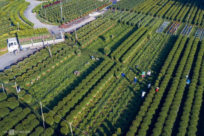 Các thương lái chở hoa đi bán tại phường Chánh Lộ, TP Quảng Ngãi. Bộ ảnh các làng hoa do nhiếp ảnh gia Duy Sinh (Quảng Ngãi) thực hiện nhằm giới thiệu một phần vẻ đẹp của vùng đất nơi anh đang sinh sống và làm việc.