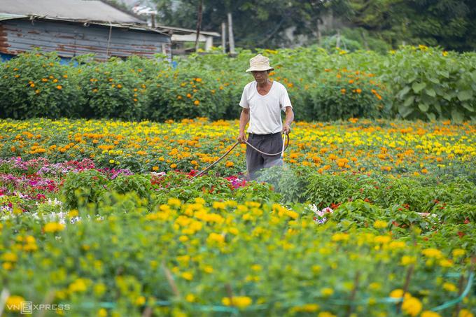 Người nông dân chăm sóc cho các luống hoa. Để chuẩn bị cho vụ Tết, người dân địa phương bắt đầu xuống giống, gieo trồng các loại hoa từ trước 6 - 8 tháng.