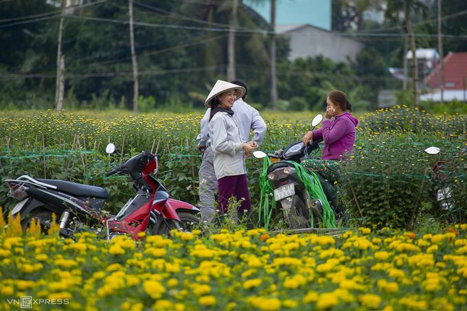 Những người làm vườn trò chuyện trên ruộng hoa. Theo các chủ vườn, cúc vạn thọ, cúc pha lê và mồng gà được trồng nhiều nhất. Gần Tết, các công đoạn chăm hoa như bón phân, tưới nước được thực hiện cẩn thận hơn để hoa nở đều, đẹp và bắt mắt nhất.