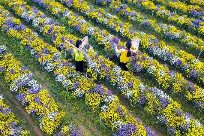 Hai nữ du khách trong trang phục áo bà ba chụp ảnh tại làng hoa Nghĩa Hà.