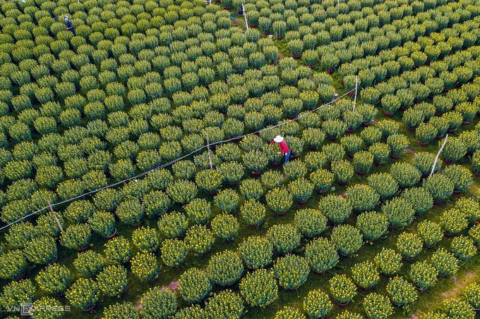 Ngoài các địa danh trên, du khách tới Quảng Ngãi thời gian này có thể tham quan làng hoa cúc lớn nhất miền Trung tại huyện Tư Nghĩa và Mộ Đức. Tại trung tâm thành phố, hoa kiểng được tập kết, bày bán tại khu vực quảng trường trên đường Phạm Văn Đồng.