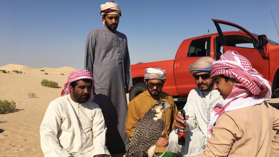 Cuộc săn lùng thường diễn ra vào sáng sớm và chiều muộn từ giữa tháng 11-2 trên vùng sa mạc rộng lớn, khô cằn.