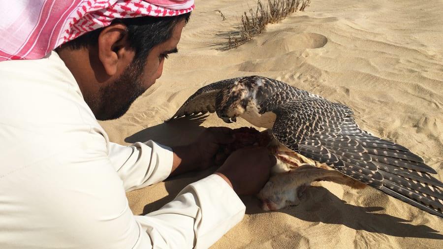 Việc sở hữu chim ưng không cần thiết đối với những vị khách đến khu bảo tồn. Bạn có thể ra ngoài săn bắn cùng hướng dẫn viên và huấn luyện viên ở đây. Những con chim của họ sẽ giúp bạn có đủ điều kiện để tham gia trải nghiệm đáng nhớ.