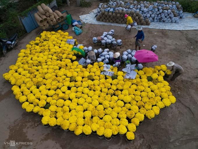 Tại cánh đồng hoa trong làng hoa Sa Đéc mỗi ngày có 20-30 nhân công trồng và chăm sóc hoa, được chia thành nhiều công đoạn như vận chuyển nguyên liệu, trồng, tưới nước hay tỉa cành hoa.  Công đoạn cuối là cắt tỉa để chậu hoa gọn gàng. Một chủ vườn hoa cho biết trồng hoa phải có đam mê mới làm được, mỗi người trồng hoa có thể xem là một nghệ sĩ.