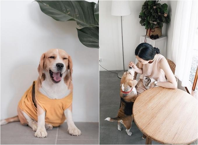 """Chú chó beage - """"nhân viên"""" đặc biệt của quán - luôn biết cách lấy lòng khách, dễ làm phái nữ mềm lòng. Ảnh Orange Bliss & bingllow"""