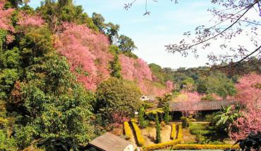 tour-thai-lan-4n3d-chiang-mai-chiang-rai-mua-hoa-anh-dao-chi-8490000-dong-ivivu-1