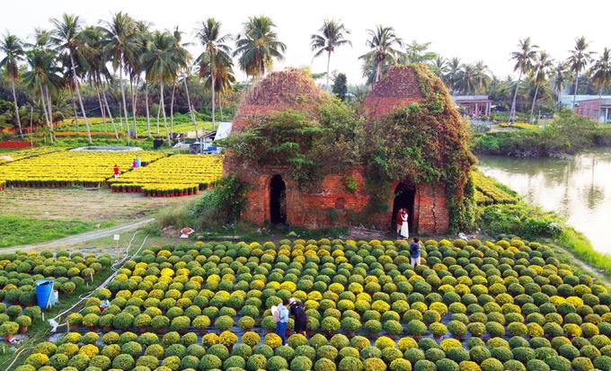 Gần Tết, vườn hoa bung nở. Nhiều du khách đến tham quan, chụp ảnh hoa và lò gạch 100 tuổi.