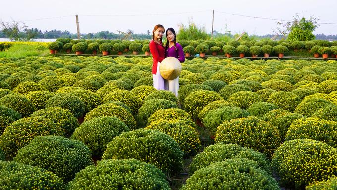 Chị Trịnh Huỳnh Hải Cơ (25 tuổi, phải, quê Bến Tre) cùng bạn chụp ảnh bên các luống cúc mâm xôi.