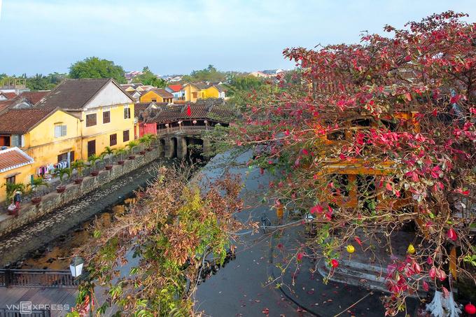Cây bàng thay lá gần chùa Cầu - ngôi chùa nằm vắt ngang con lạch nhỏ chảy ra sông Hoài, một nhánh của dòng sông Thu Bồn. Năm 1990, chùa Cầu được cấp bằng Di tích Lịch sử Văn hóa quốc gia, đồng thời trở thành hình ảnh biểu tượng của phố cổ Hội An.