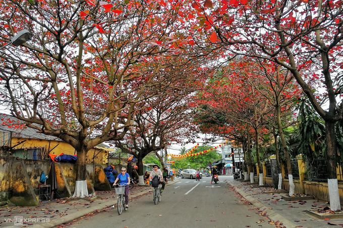 Hai du khách nước ngoài đạp xe khám phá phố cổ trên đường Phạm Hồng Thái. Tại Hội An, những con đường trồng nhiều cây bàng là Nguyễn Thị Minh Khai, Nguyễn Thái Học, Phạm Hồng Thái hay Thái Phiên.