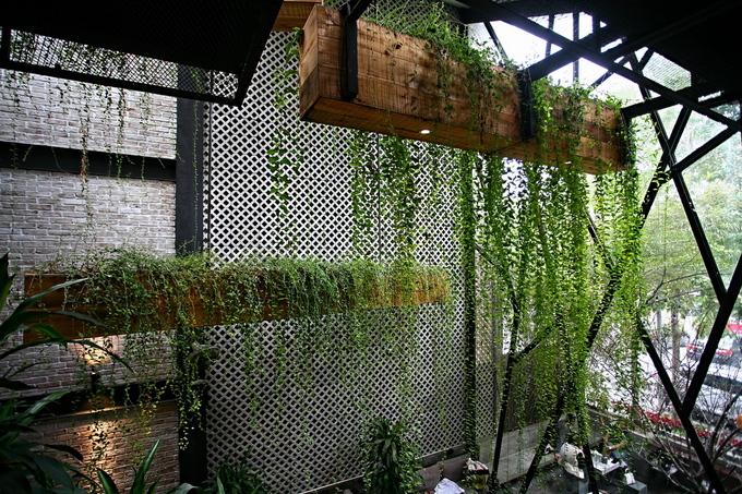 Những bồn cây dây leo cỡ lớn lơ lửng ở khoảng thông tầng như vườn treo Babylon.