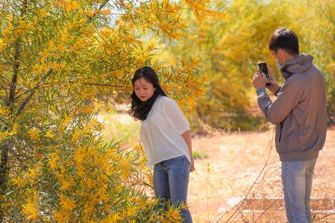 Mỹ Hồng, 17 tuổi, cùng bạn bè đến rừng keo vãn cảnh và chụp ảnh khi biết đã đến mùa hoa nở.