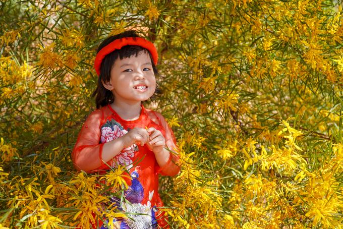 """Bé Ken (5 tuổi, TP Phan Thiết) được mẹ khoác áo mới, tạo dáng giữa những chùm hoa vàng. """"Như truyền thống, cứ đến mùa hoa nở, gia đình tôi đều ra đây chụp hình và chiêm ngưỡng nét đẹp quê mình"""", chị Mộc Miên, mẹ bé Ken, nói."""