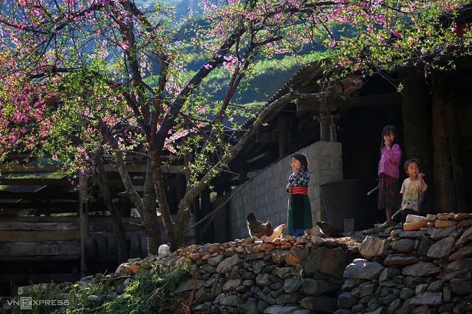 Những đứa trẻ hồn nhiên vui chơi dưới gốc cây đào đang mùa hoa nở rộ.
